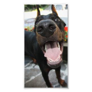 Funny Doberman Photograph