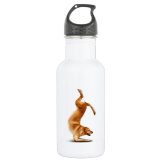 Funny dog 532 ml water bottle