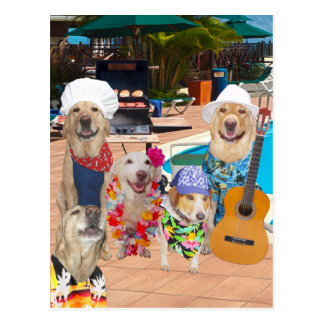 Funny Dog Customizable Pool Party Postcard Invite