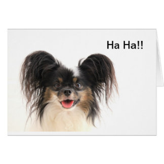 Funny Dog, Ha ha, You're Old Birthday Card