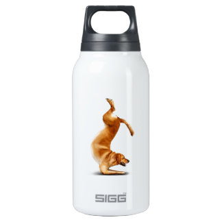 Funny dog insulated water bottle
