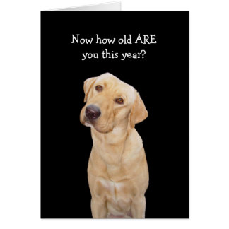 Funny Dog/Lab Birthday Card