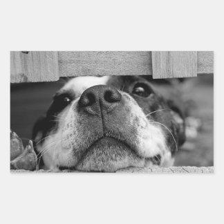 Funny Dog sticking now under Fence, Peek a Boo Rectangular Sticker