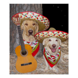 Funny Dogs/Labs in Sombreros Poster