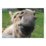 Funny Donkey Close Up Greeting Cards