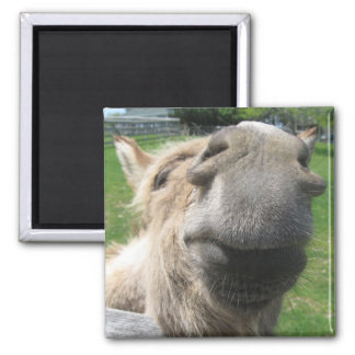 Funny Donkey Close Up Magnet