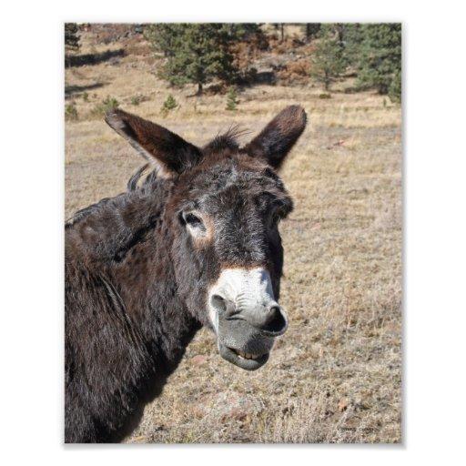 Funny Donkey Art Photo