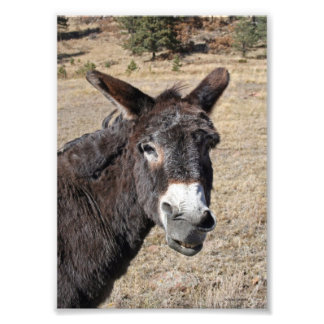 Funny Donkey Photo Print