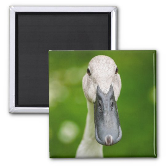 Funny Duck Close Up Magnet