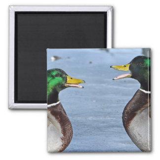 Funny Ducks Square Magnet
