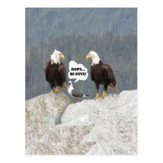 Funny Eagles and Seagull Postcard