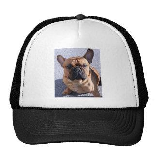 Funny Ears Cap