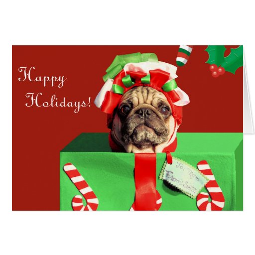 Funny Embarrassed Pug Holiday Card