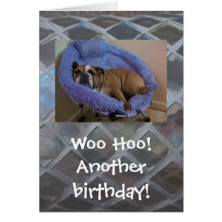 Funny English Bulldog Birthday Card