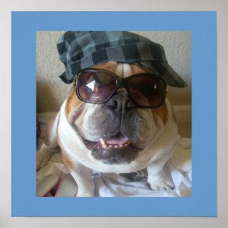 Funny English Bulldog Poster