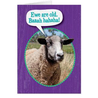 Funny Ewe Old Sheep Shot Birthday Card