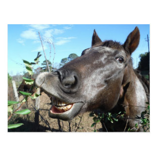 Funny Face brown horse Postcard