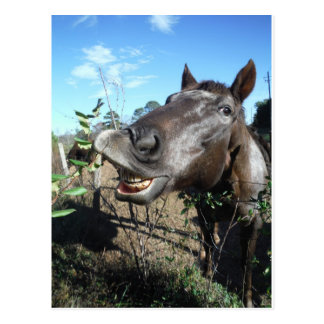 Funny Face brown horse Post Cards