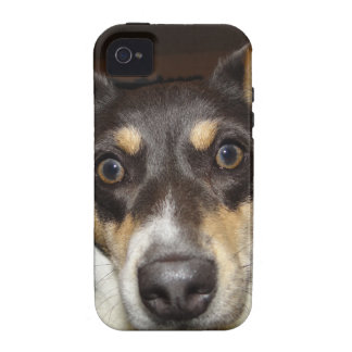 Funny Faced Dog iPhone 4/4S Cases