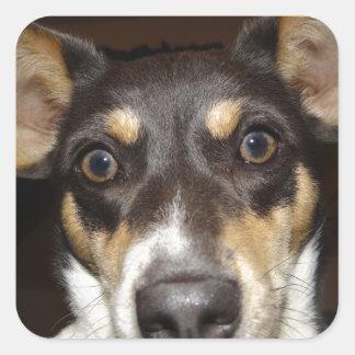 Funny Faced Dog Square Sticker