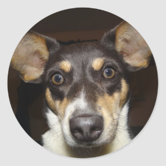 Funny Faced Dog Round Sticker