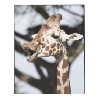 Funny faced reticulated giraffe, San Francisco