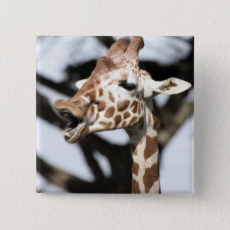 Funny faced reticulated giraffe, San Francisco 15 Cm Square Badge