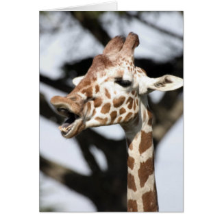 Funny faced reticulated giraffe, San Francisco Card