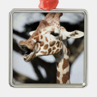 Funny faced reticulated giraffe, San Francisco Christmas Ornament
