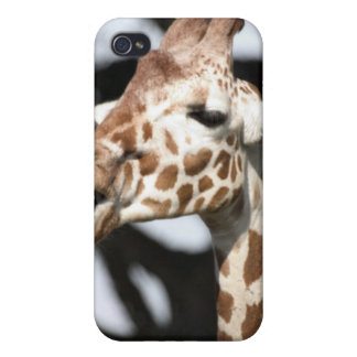 Funny faced reticulated giraffe, San Francisco Case For iPhone 4