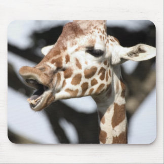 Funny faced reticulated giraffe, San Francisco Mouse Pad