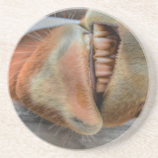 Funny Friendly Horse Muzzle and Teeth Drink Coasters