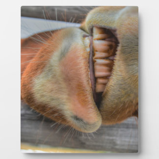 Funny Friendly Horse Muzzle and Teeth Display Plaque