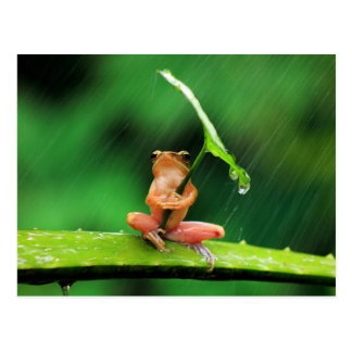 Funny Frog afraid of water Postcard