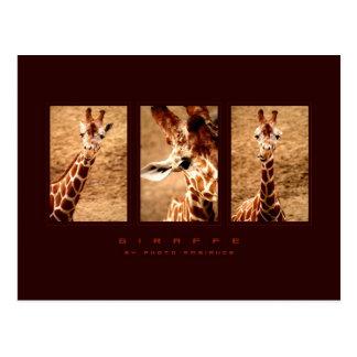 Funny Giraffe Postcard