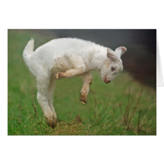 Funny Goat Baby White Goat Jumping in Pasture Card