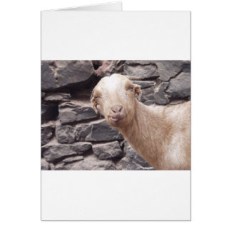 Funny Goat Card