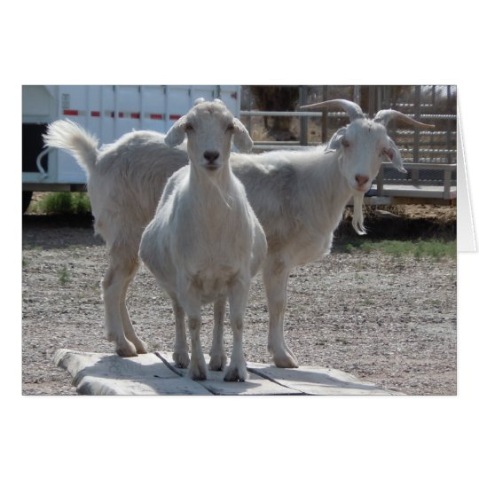 Funny Goats Anniversary Congratulations Compliment Card