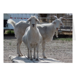 Funny Goats Anniversary Congratulations Compliment Greeting Card