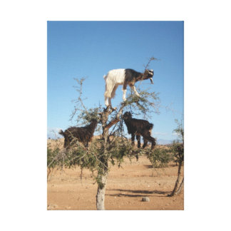 Funny goats in a tree canvas print