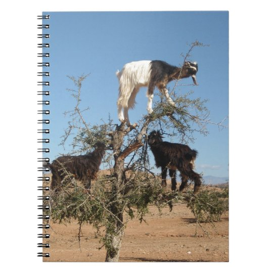 Funny goats in a tree spiral notebook