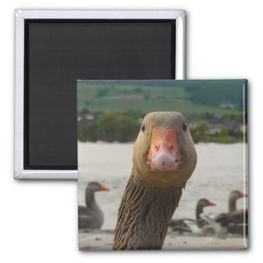 Funny Goose Close Up Magnet