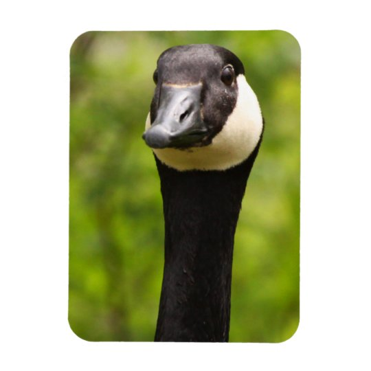 Funny Goose Magnet