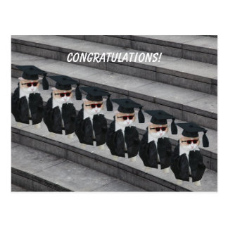 Funny Graduate Cat Postcard