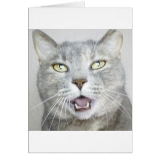 funny gray cat fluffy hilarious open mouth meow cards