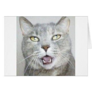 funny gray cat fluffy hilarious open mouth meow greeting card