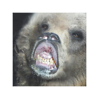 Funny Grizzly Bear Cub Licking The Glass Window Canvas Print
