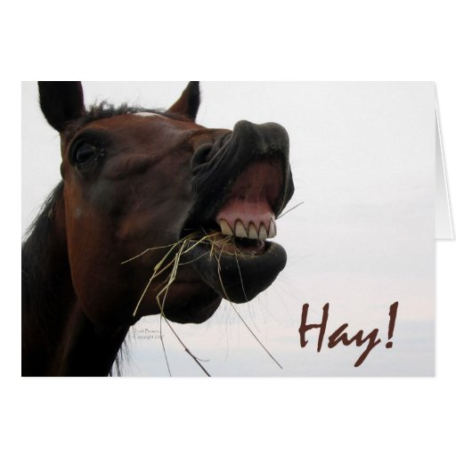 Funny Horse: Hay! Greeting Cards