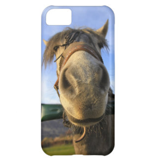 Funny Horse iPhone 5C Case