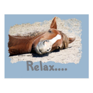 Funny Horse: Relax Postcard